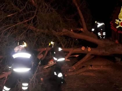 Via Aurelia, albero cade su auto in corsa: 2 feriti