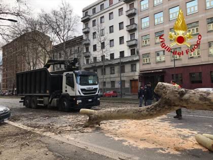 Milano, albero cade su un'auto in corso Sempione