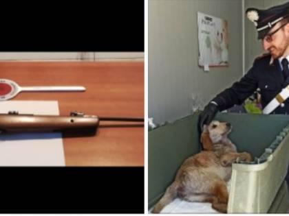 Non sopporta il cane accudito dalla vicina: prende il fucile e spara