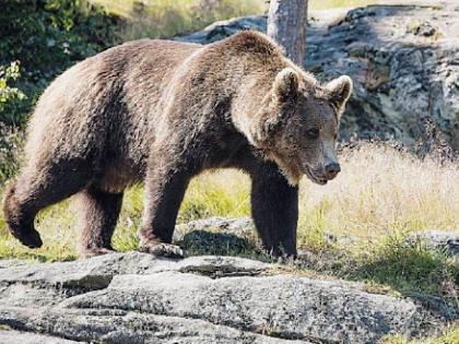 Salvate l'orso Papillon: rinchiuso e stressato si sta lasciando morire
