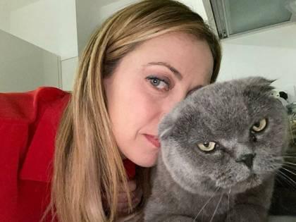 Viva il gatto, l'unico animale a prova di virus