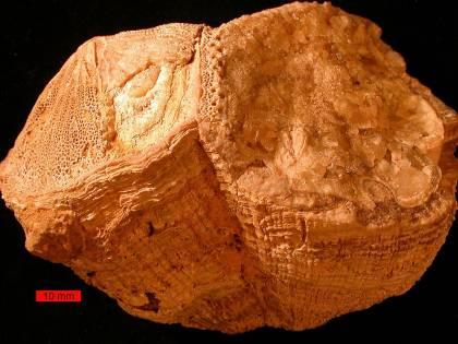 Nel Cretaceo, il giorno durava mezz'ora in meno e la Luna era più vicina