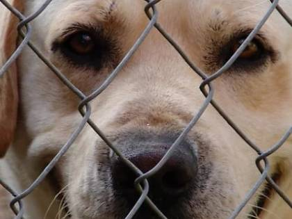 Coronavirus, è caos su acquisti e adozioni di cani