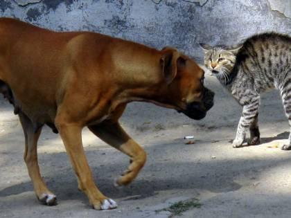 Cani e gatti troppo umani