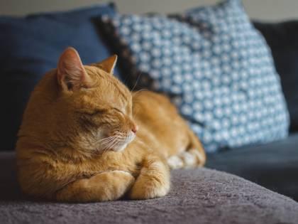Anche i gatti soffrono di ansia da separazione