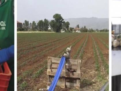 """Ira degli italiani in fila per lavorare nei campi: """"Ma il governo vuole i migranti"""""""