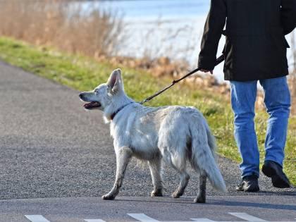 Cani a spasso per legge. Ma così non è liberale