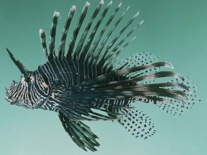 "L'allarme nei nostri mari: ""Sempre più pesci alieni"""