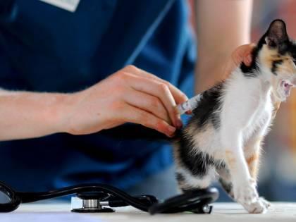 """""""Così ci rimettono solo i gatti..."""". Gli animalisti contro gli scienziati"""
