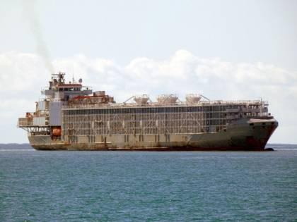"""Quando """"l'arca di Noè"""" affonda e sparisce. A bordo c'erano 42 marinai e 5.800 mucche"""