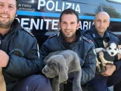 Da randagi ad anti-droga. La seconda vita dei cani della polizia penitenziaria