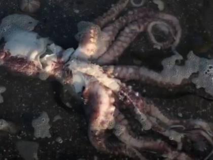 Animali morti e surfisti con malesseri: il giallo in Russia