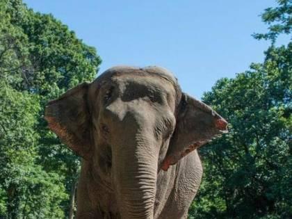 """L'elefante del Bronx lotta per i """"diritti umani"""". Per tutti gli altri animali"""