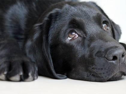 """L'allarme dei veterinari: """"No ai cibi delle Feste per gli animali"""""""
