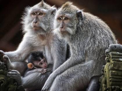 Strage di scimmie, Nasa sotto accusa