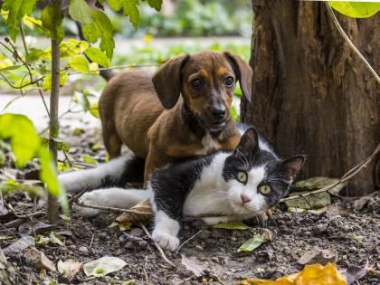 """Sesto senso e telepatia, i """"poteri"""" di cani e gatti"""