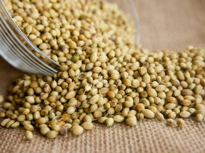 Coriandolo, virtù e benefici dell'erba aromatica