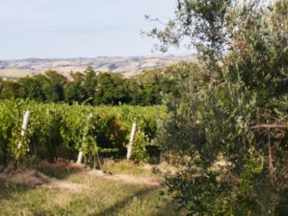 La mazzata sui vini italiani: così Bruxelles ci mette in ginocchio