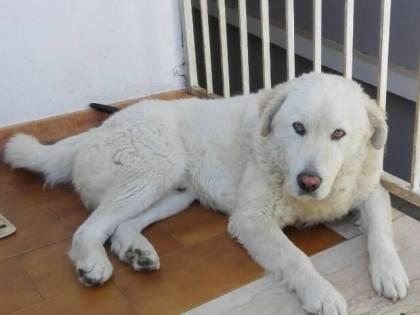 La bestia che ha ucciso il mio cane