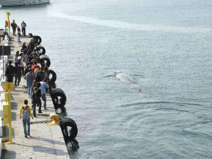 È scontro tra governo e regioni sulle isole Covid free