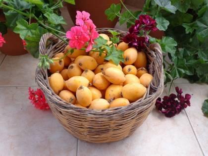 Nespole, il frutto primaverile alleato di bellezza