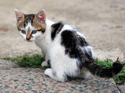 Così un gatto ha reso calva una bambina