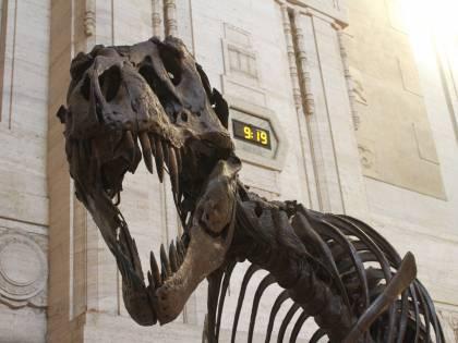Scoperta choc: cadavere nel dinosauro di cartone