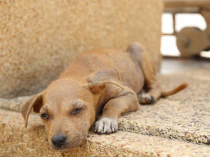 Tre milioni i cani adottati e ora non abbandonateli