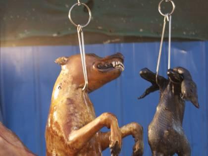 """Choc in Cina, parte il """"festival di sangue"""": cosa accade ai cani"""