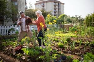 Fare l'orto: perché fa bene dopo i 60 anni