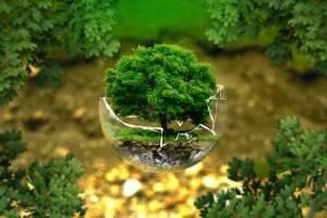 L'autogol dell'ambientalismo