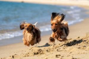 Vacanze con cani e gatti, come organizzarle