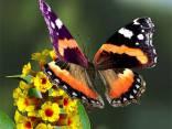 Ritratto di Butterfly87