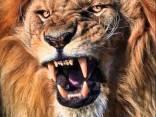 Ritratto di leon65