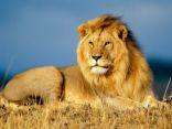 Ritratto di mario.leone