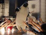 Ritratto di Pinguino Pino