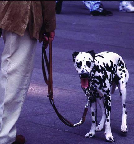 Guerra a chi sporca con i cani