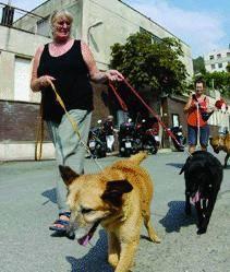 All'Amiu le multe sui cani
