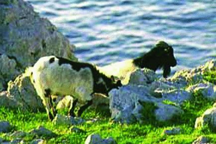 All'isola delle caprette parte lo sfratto