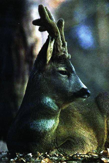 Ecco perché i cacciatori sparano a Bambi