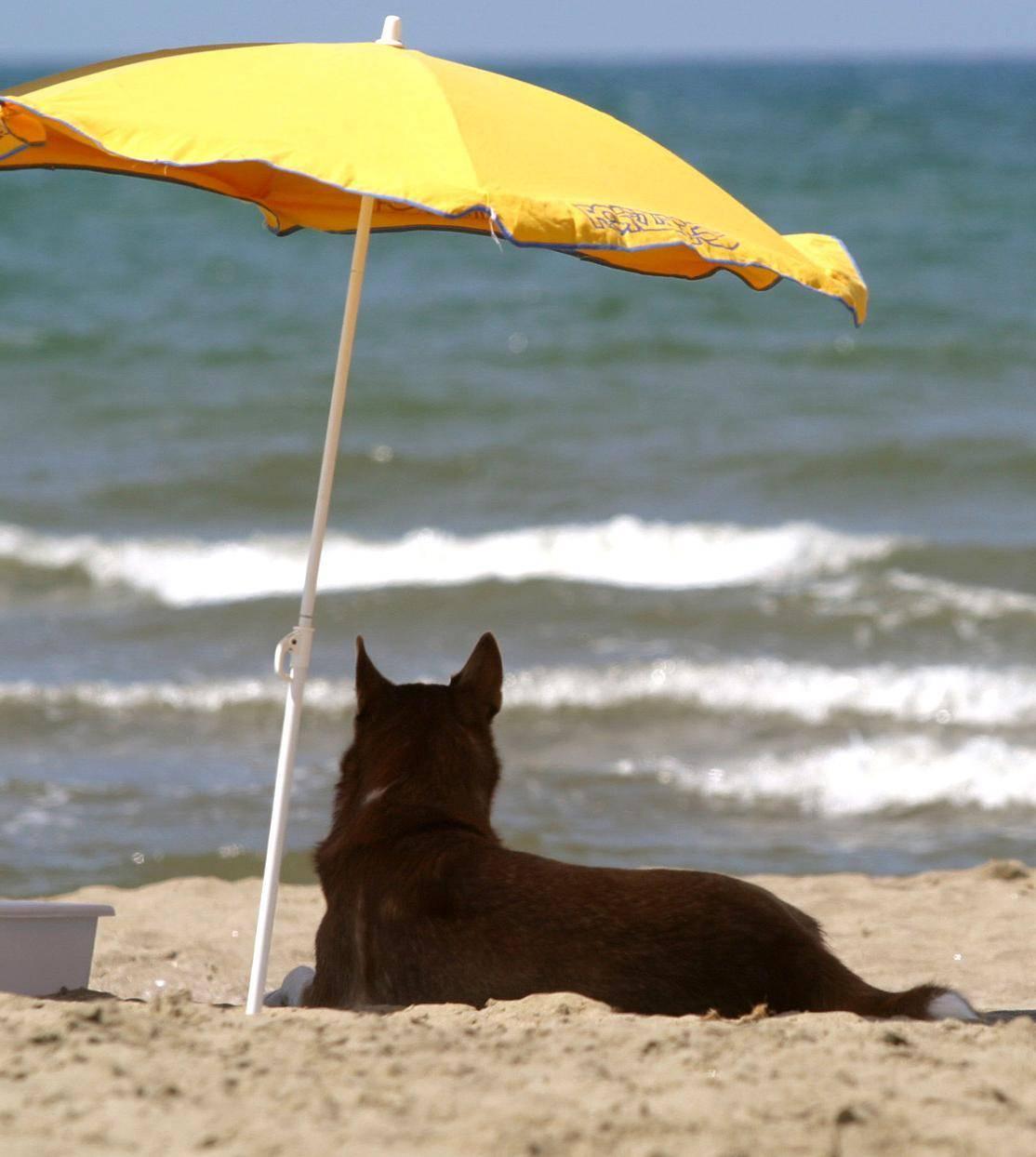 A Vesima e Punta Vagno le spiagge aprono ai cani