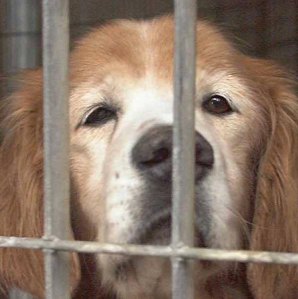 «Nel canile comunale animali fatti morire senza cure»