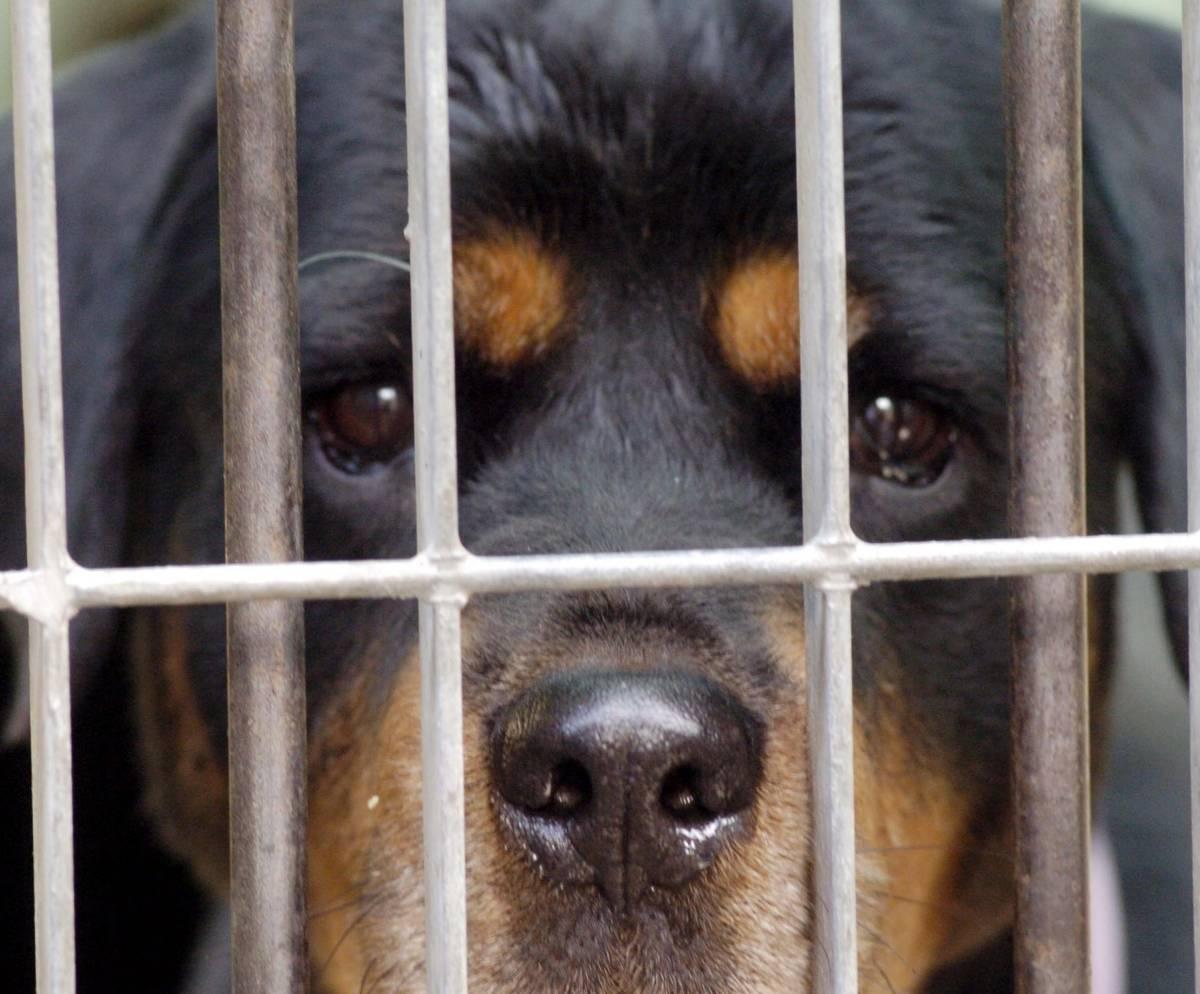 Ora il veterinario si difende: «Il  canile non è un lager»