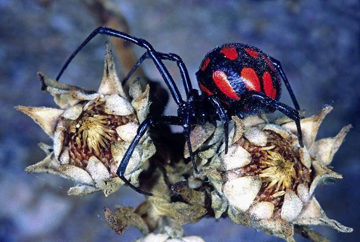 Anche ragni e scorpioni hanno un fascino segreto
