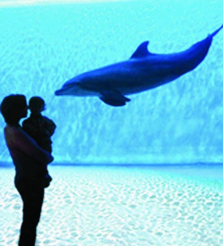 Una nuova casa per i delfini nell'Acquario che sale di grado