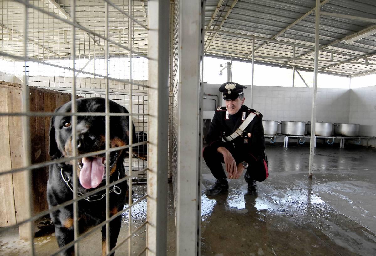 Torino, bimba di nove mesi sbranata da due rottweiler