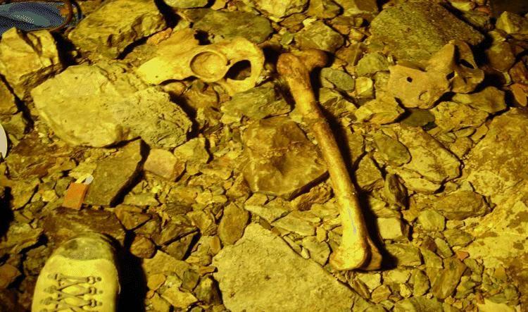 Alla luce dopo 62 anni i corpi gettati nella foiba di Campastrino