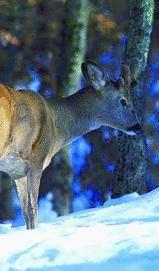 Caccia Animalisti  contro la Provincia