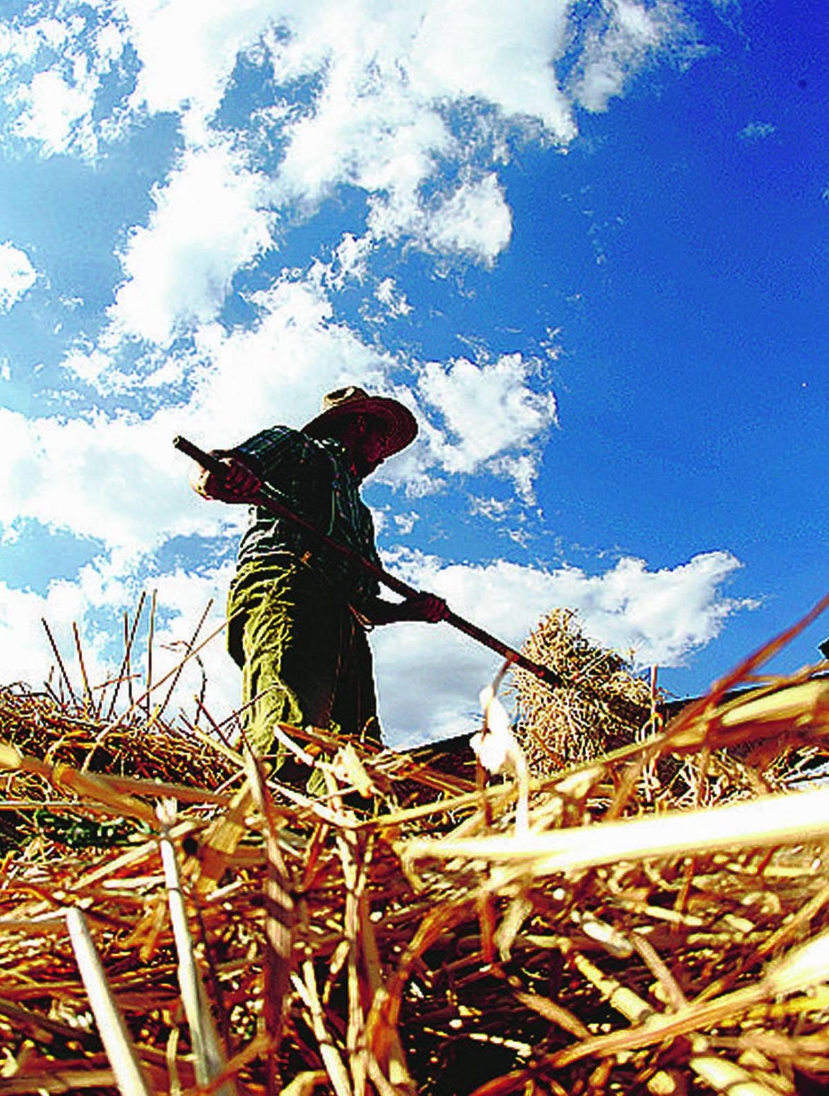 Voglia di agricoltura Sempre più giovani chiedono come fare