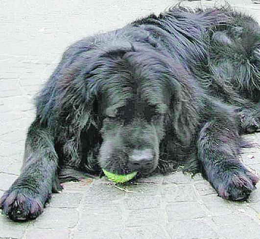 Muore d'infarto mentre bastona il cane